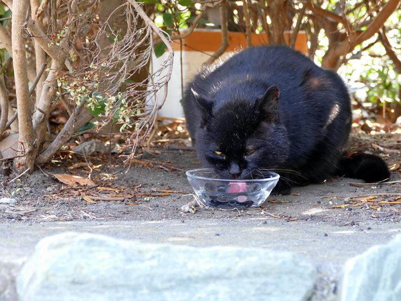 ガラス容器で水を飲んでる黒猫2