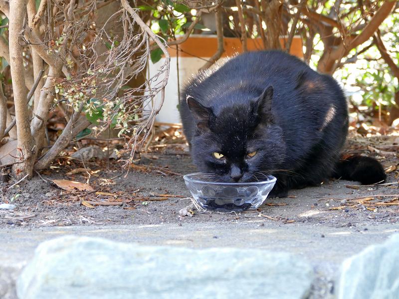ガラス容器で水を飲んでる黒猫3