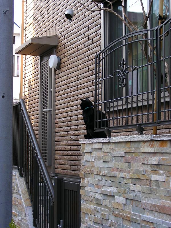 洋風民家玄関の黒猫1