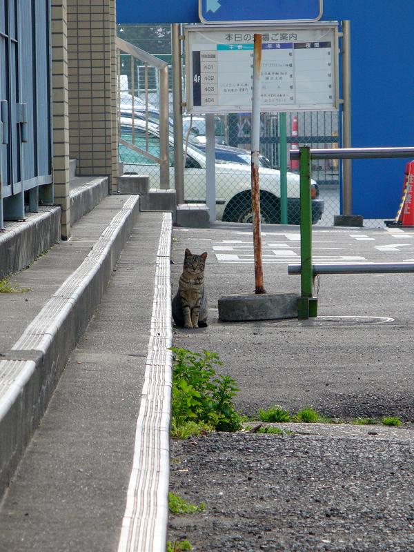 階段前のキジトラ猫1