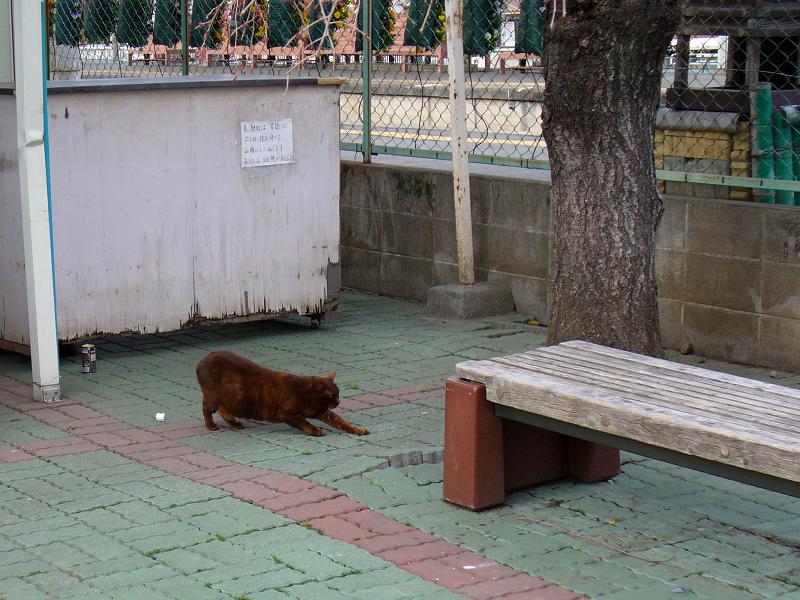 駅前の焦げ茶猫1