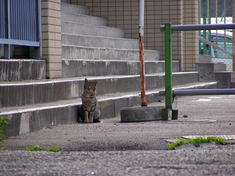 階段前のキジトラ猫2