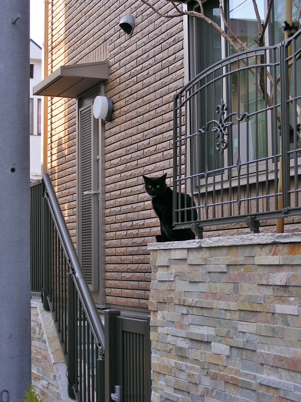 洋風民家玄関の黒猫2