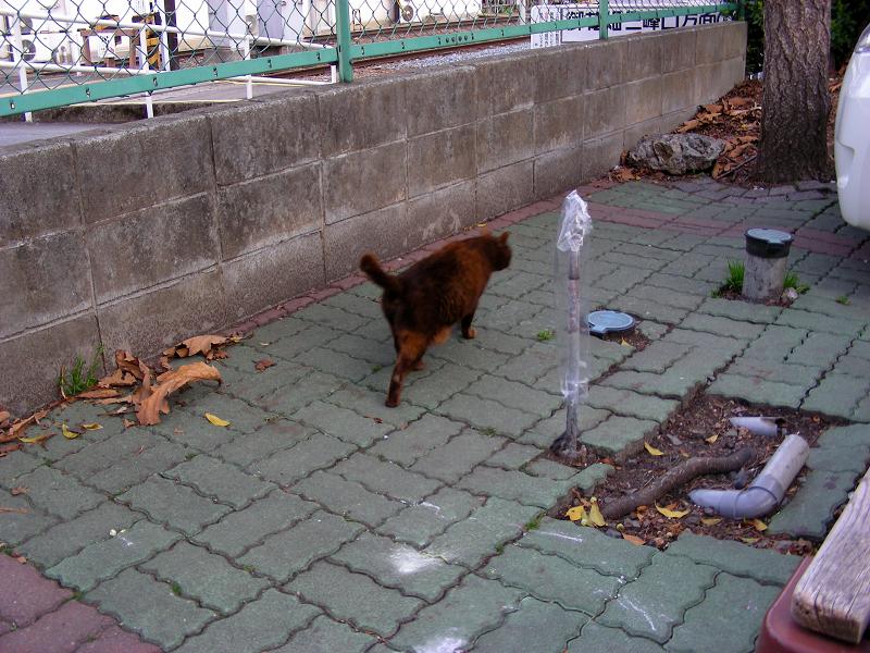 駅前の焦げ茶猫2