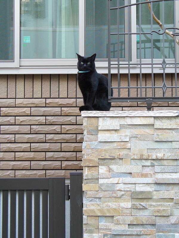 洋風民家玄関の黒猫3