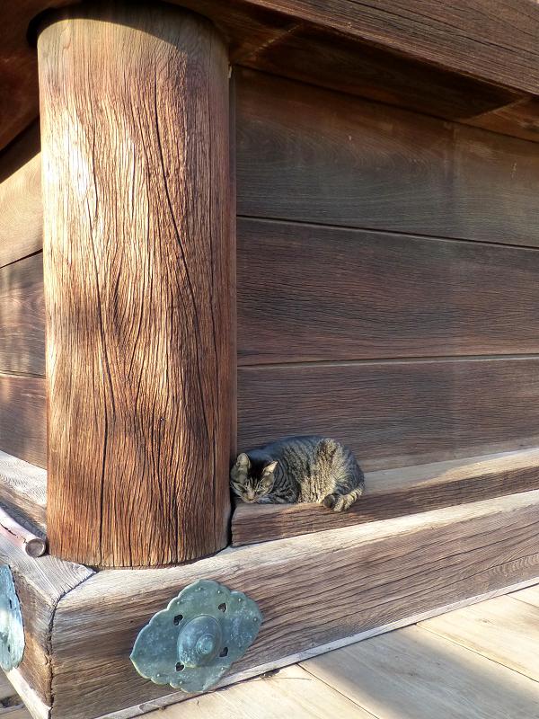 柱の横のキジトラ猫1
