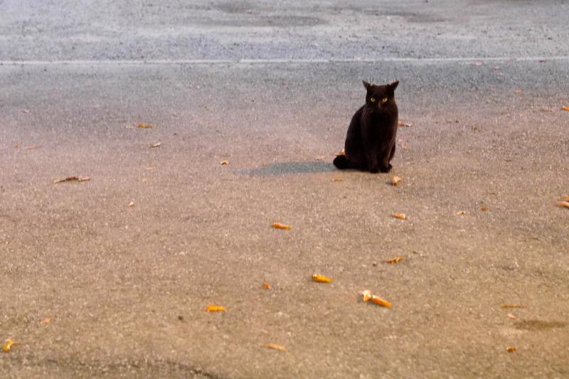 夜の寺境内の黒猫2