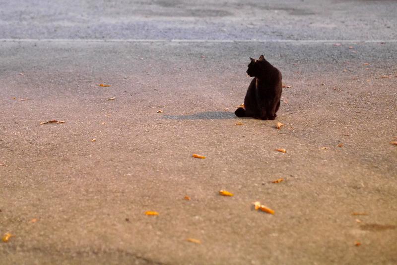 夜の寺境内の黒猫3