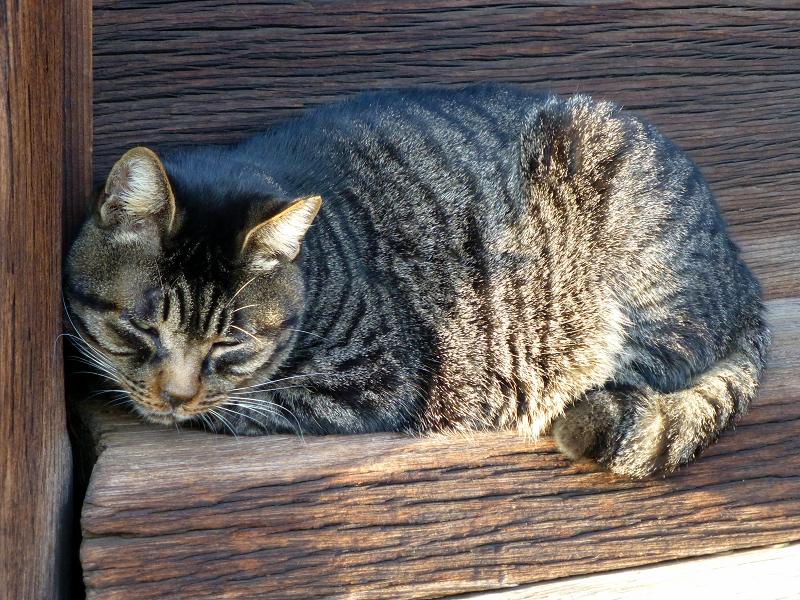 柱の横のキジトラ猫3