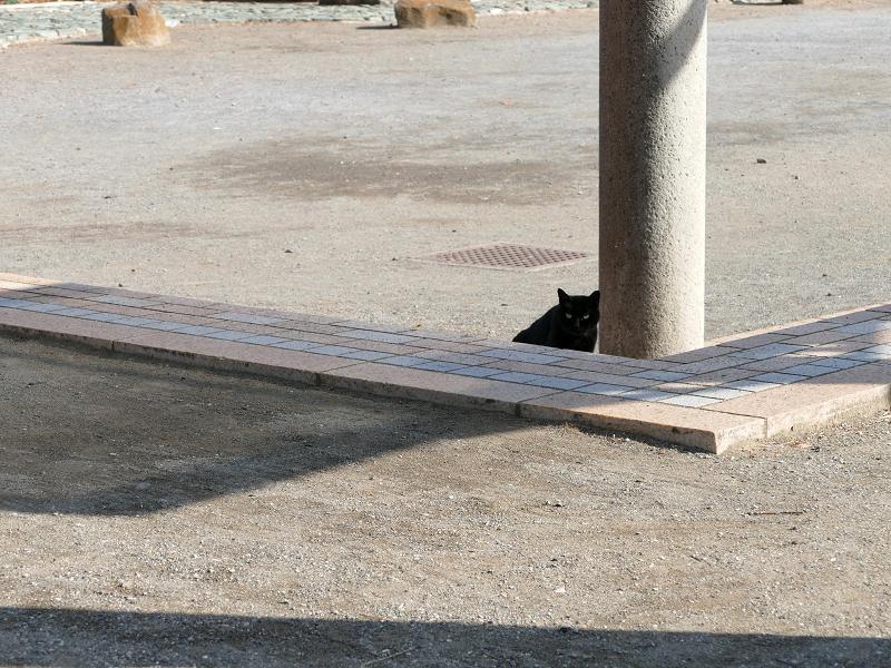 公園の黒猫3