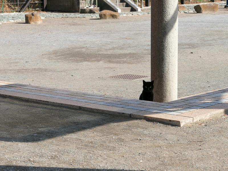 公園の黒猫4