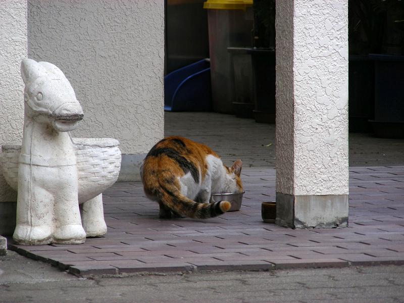ご飯を食べてた三毛猫1