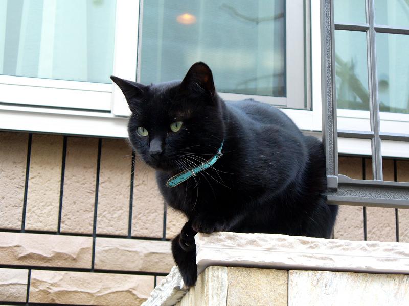 洋風民家玄関柱の黒猫1