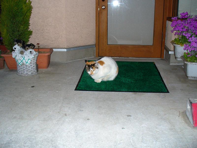 玄関マットと三毛猫