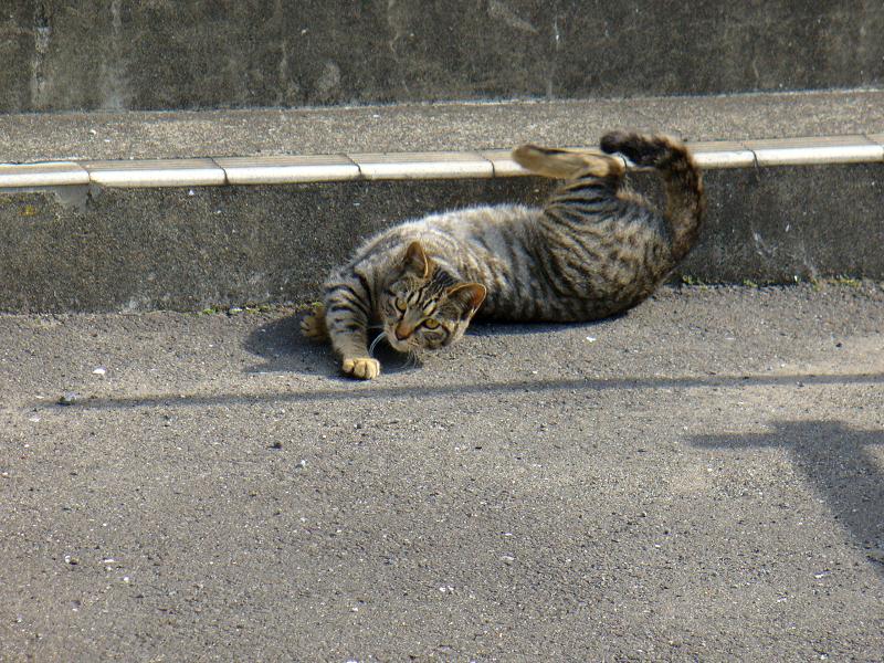 階段下のキジトラ猫2