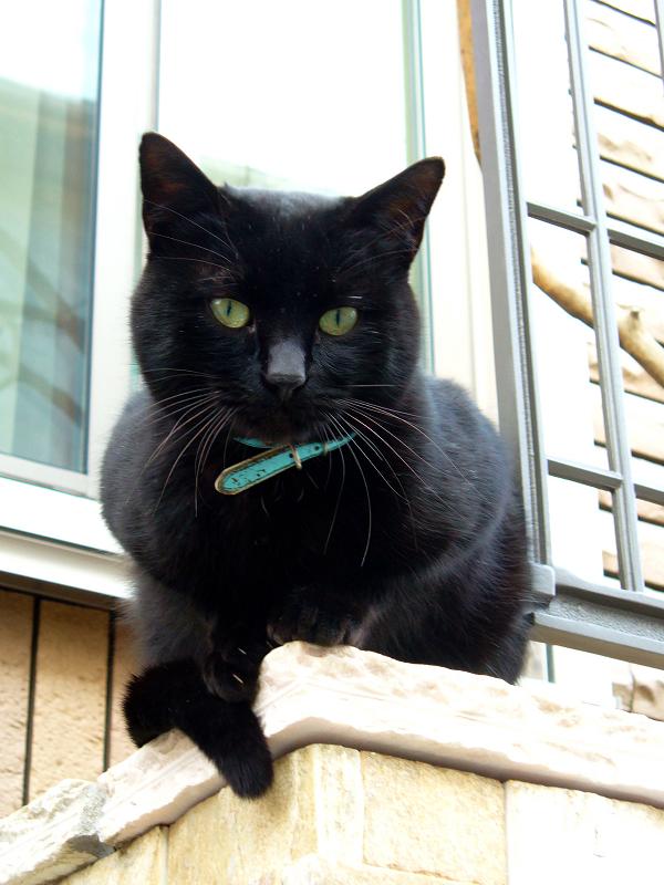 洋風民家玄関柱の黒猫2