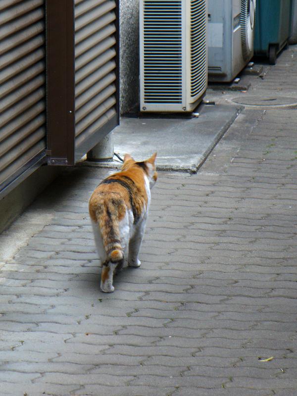 ご飯を食べてた三毛猫2