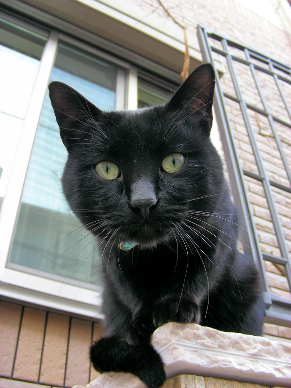 洋風民家玄関柱の黒猫3