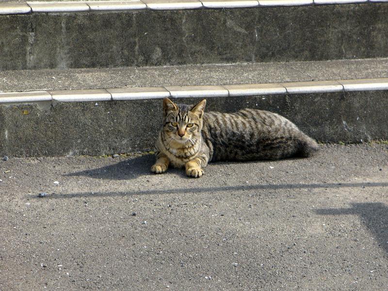 階段下のキジトラ猫3