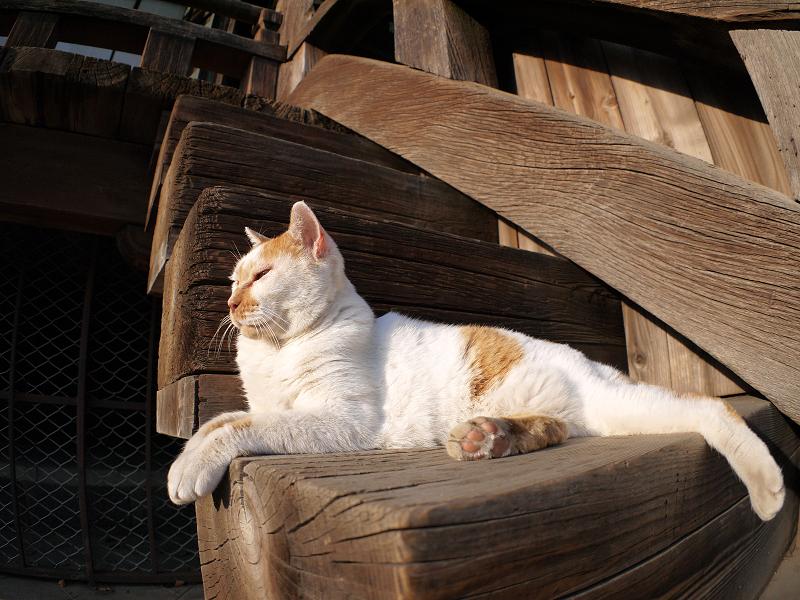階段の端の白茶の猫1