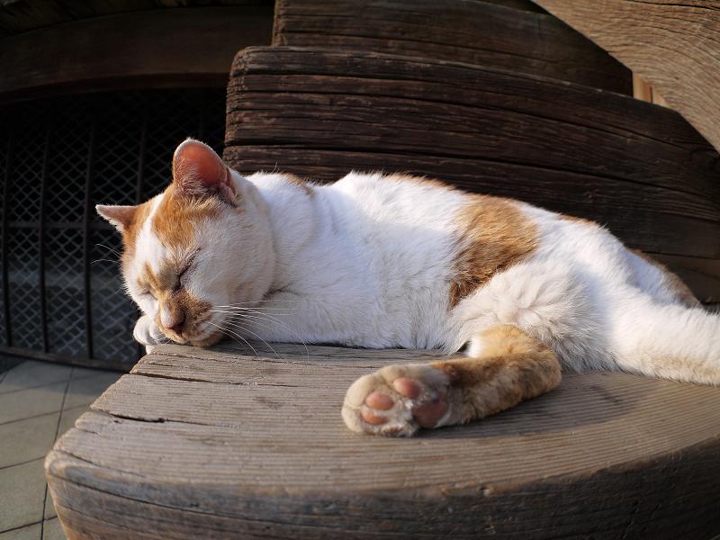 階段の端の白茶の猫3