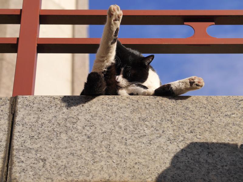 濡れ縁から足を突き出す黒白猫1