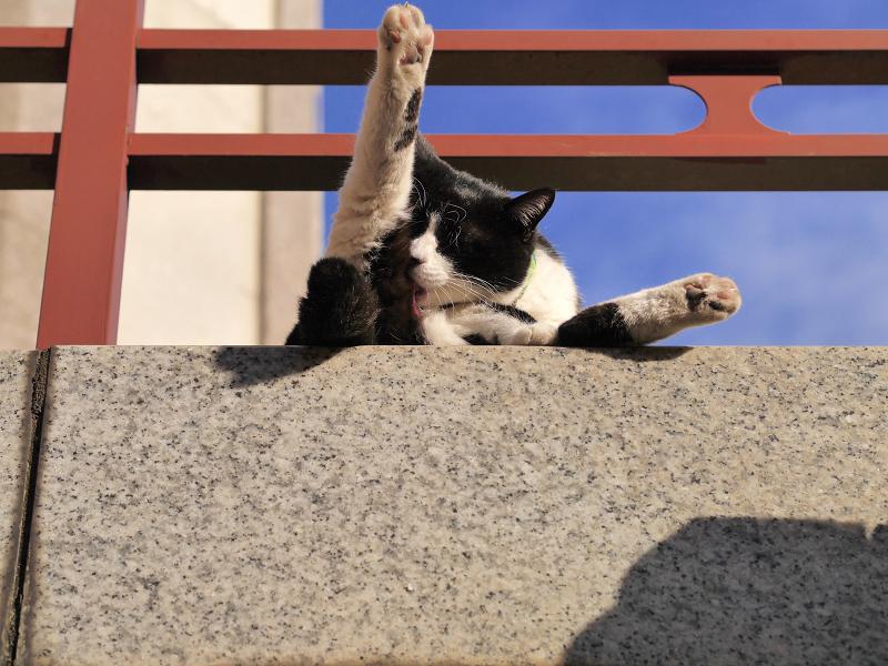 濡れ縁から足を突き出す黒白猫2