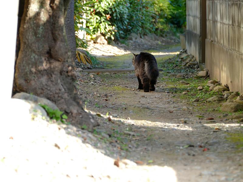 砂利道路地を奥の方へ歩く毛長の黒猫1