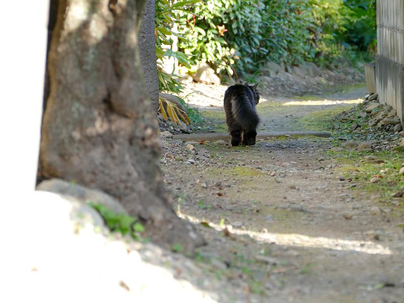 砂利道路地を奥の方へ歩く毛長の黒猫2