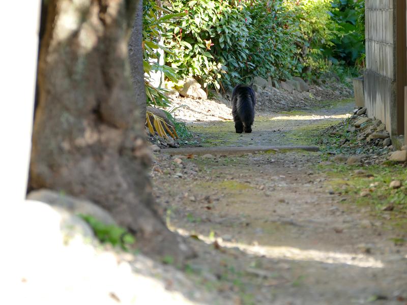 砂利道路地を奥の方へ歩く毛長の黒猫3