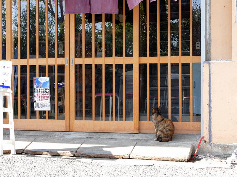 店前のサビ柄猫1