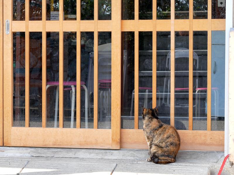 店前のサビ柄猫2