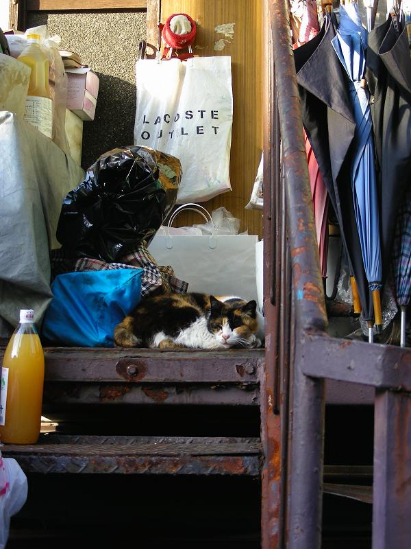 生活感溢れる階段の三毛猫1