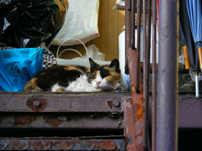 生活感溢れる階段の三毛猫3
