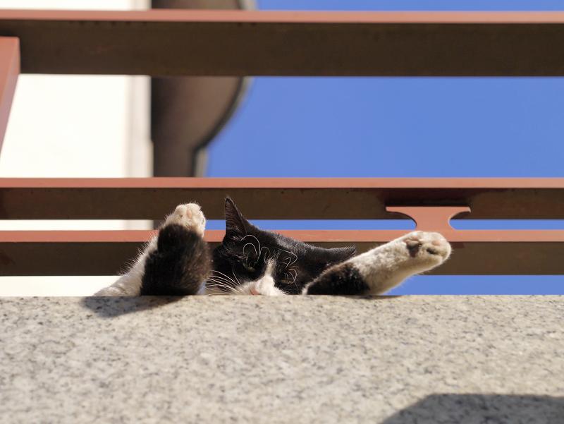 濡れ縁で寝ちゃう黒白猫1