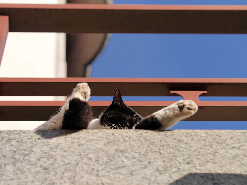 濡れ縁で寝ちゃう黒白猫2