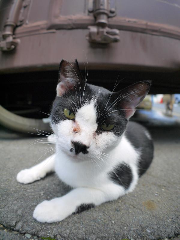 コンテナ前の黒白猫ローアングル1