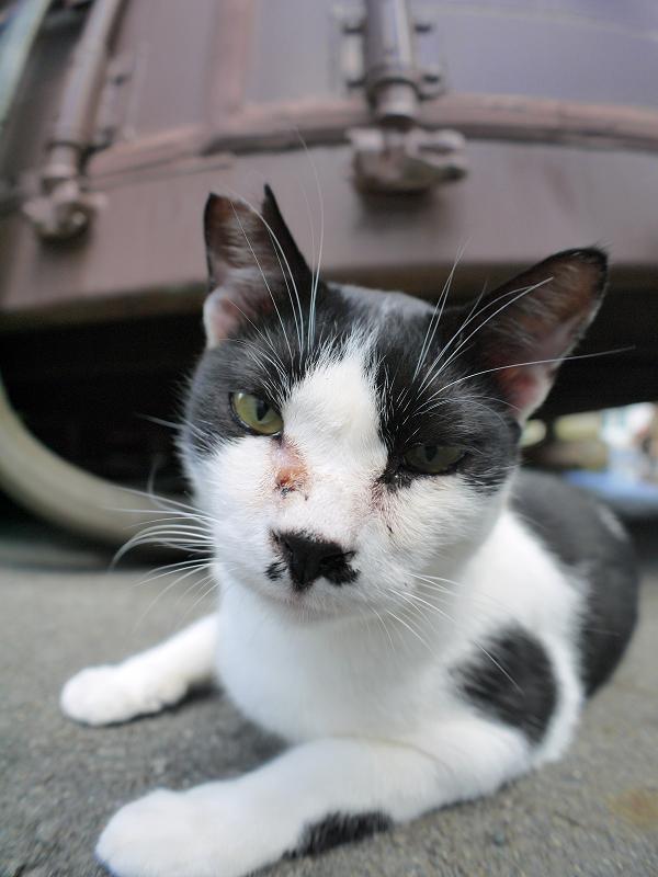 コンテナ前の黒白猫ローアングル2