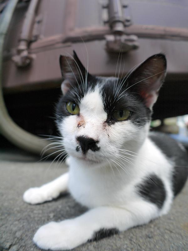 コンテナ前の黒白猫ローアングル3
