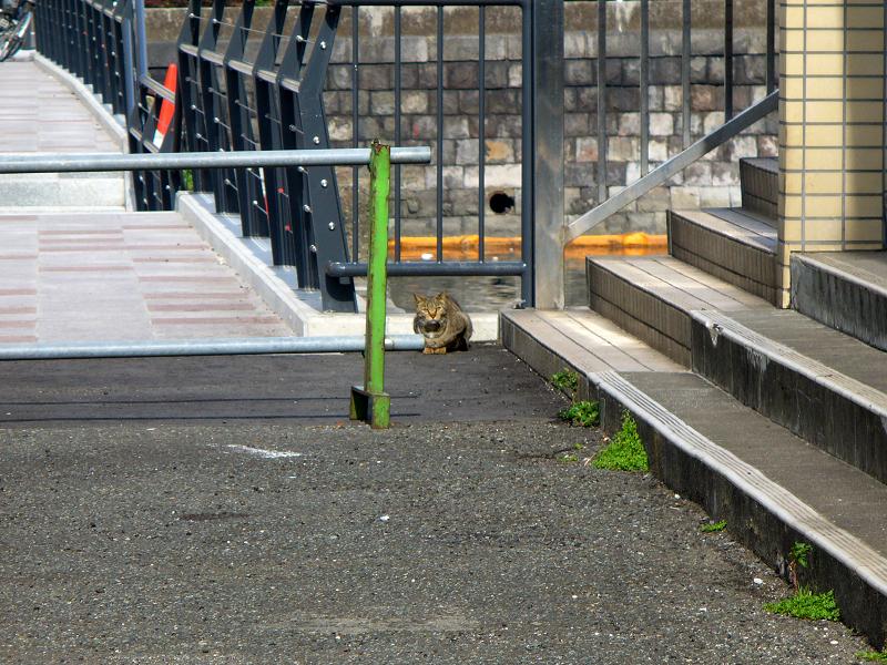 運河のそばのキジトラ猫1
