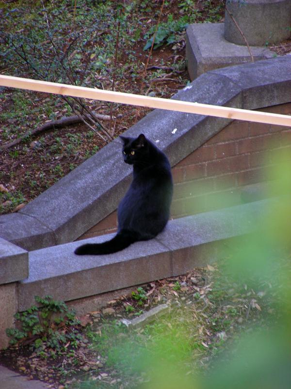 公園の黒猫2
