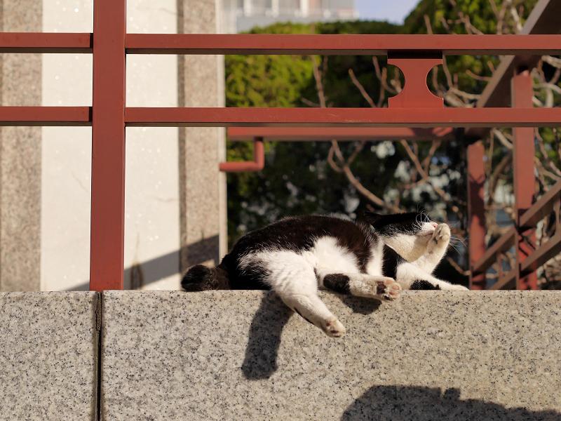 濡れ縁の端で毛繕いの黒白猫1