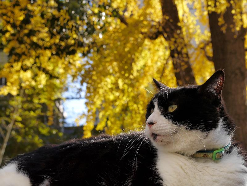 卒塔婆に乗ってる黒白猫2