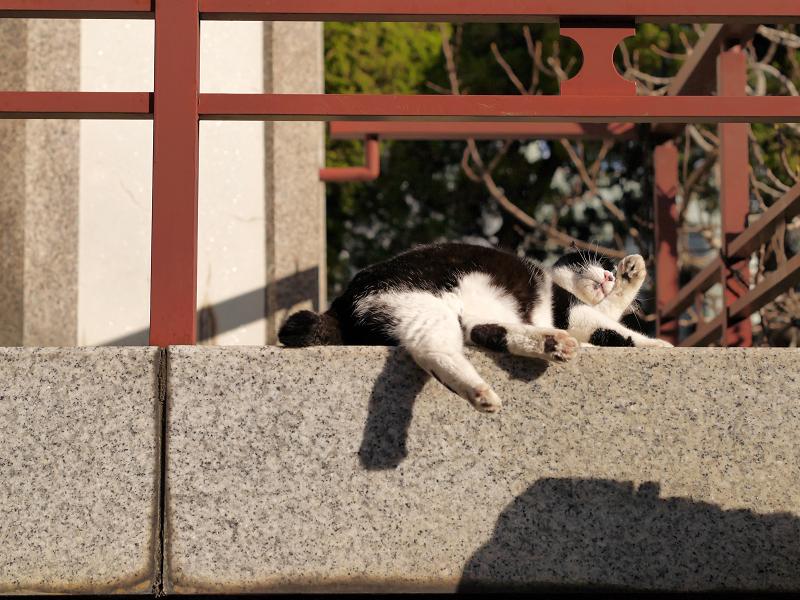 濡れ縁の端で毛繕いの黒白猫2