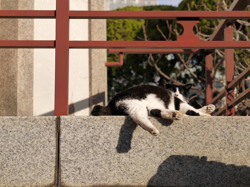 濡れ縁の端で毛繕いの黒白猫3