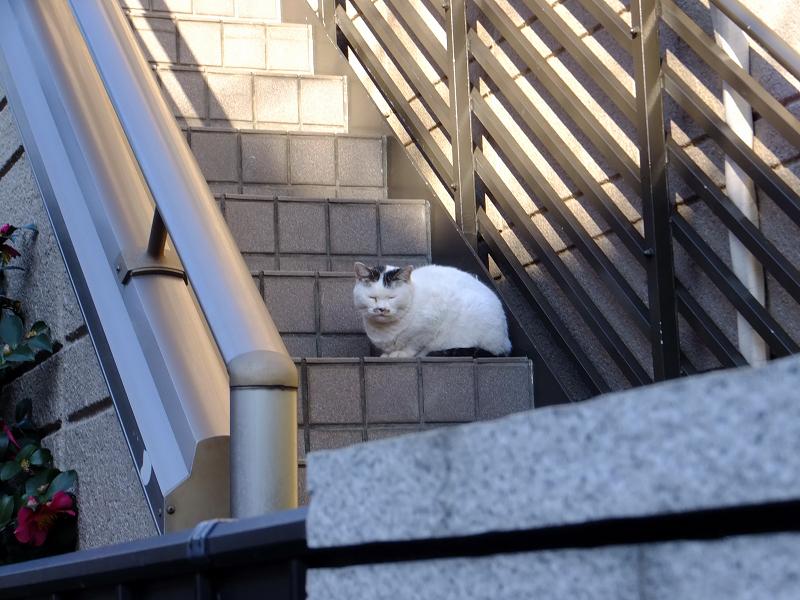 民家階段の猫たち1
