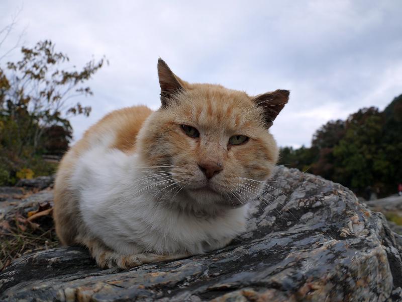 川原岩の茶白猫1