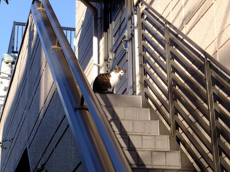 民家階段の猫たち2