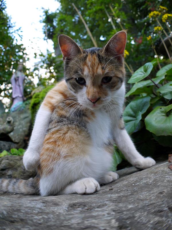 若手の三毛猫2