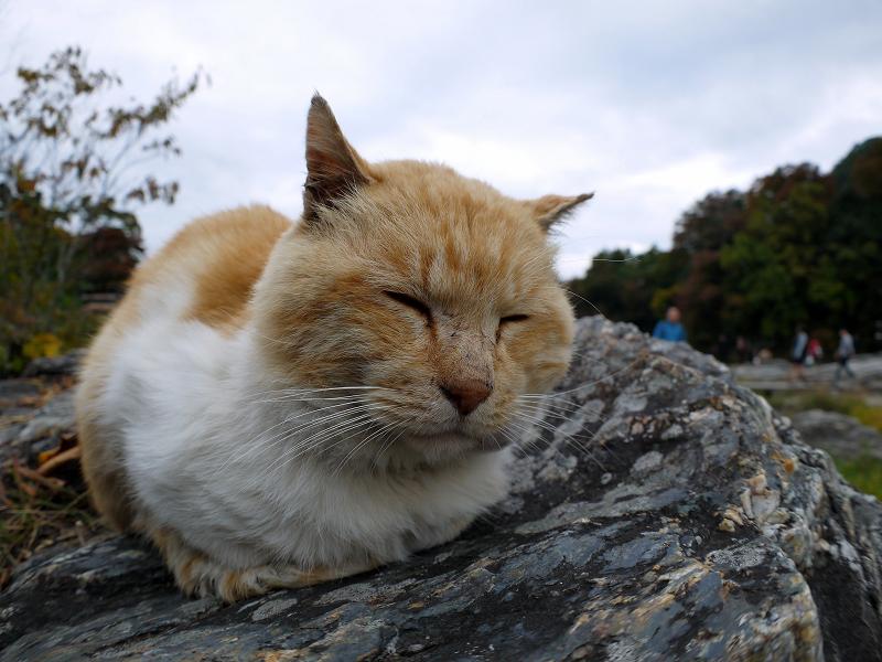 川原岩の茶白猫2